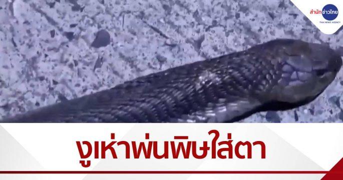 กู้ภัยจับงูเห่า ถูกพ่นพิษใส่ตา
