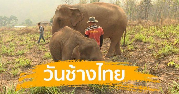 วันช้างไทย ในวันที่วิกฤติรุมเร้า
